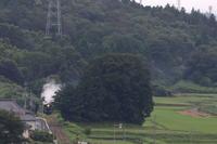 緑の山里の小さな登り坂に小さな白煙- 2020年梅雨・真岡鉄道 - - ねこの撮った汽車