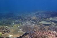 20.7.21そして、西ボートも - 沖縄本島 島んちゅガイドの『ダイビング日誌』