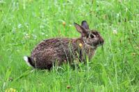 自由に過ごす公園のウサギさん - ぶらり散歩 ~四季折々フォト日記~