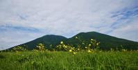 ユウスゲ・三瓶山西の原 - じじ & ばば の Photo blog