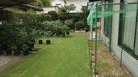 鉢植えブルーベリーの収穫終了と防鳥網撤去 in 広島市 - 初めてのブルーベリー栽培記