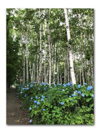 種まき研修会に行きました - 雪割草 - Primula modesta -