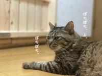 マツコのうれしい回復 - gin~tetsu~nosuke