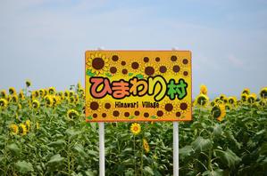 能登夏祭三昧5河北潟ひまわり2014 -