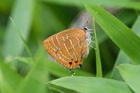 中国山地の他のチョウたち - Sky Palace -butterfly garden- II