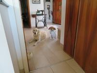 ゲスト犬もキッチン&ダイニングは禁止 - ドイツの陽だまり