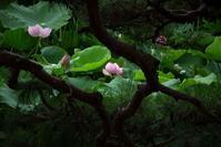松の枝越しに - フォトな日々