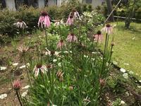 6月の草庭仕事 - Healing Garden  ー草庭ー