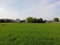 稲が成長しました。 - 趣味・・・取って(撮って)走って、味わえるか・・・