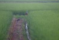 思い…【ホシゴイ・アオサギ】 - 鳥観日和