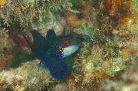 20.7.23海の日 - 沖縄本島 島んちゅガイドの『ダイビング日誌』