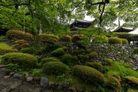 サツキ咲く善峯寺 - 花景色-K.W.C. PhotoBlog