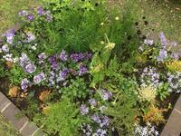 new plants  6月の花 - Healing Garden  ー草庭ー
