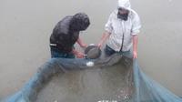 小西養鯉場&小西米プロジェクトTheOdyssey2020-60鯉の里は米の郷 - 鯉の里は、米の郷