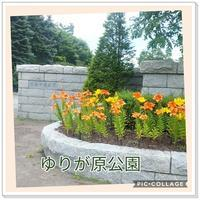 札幌百合が原公園 - T子の徒然2