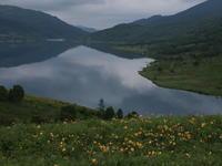 野反湖(2) ニッコウキスゲをたっぷりと… (2020/7/20撮影) - toshiさんのお気楽ブログ