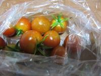 トマト - さかえのファミリー