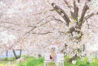 2020年の桜 - 幸せカメラ ~一眼レフで綴る~