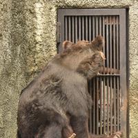 美熊アマナちゃん - 徒然日記