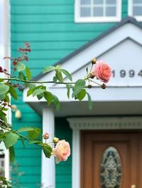 移住先はどこ?と薬剤散布♫と今日の2番花♡ - 薪割りマコのバラの庭