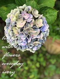 連休3日目です〜♬ -  Flower and cafe 花空間 ivory (アイボリー)