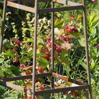 グスベリ― - sola og planta ハーバリストの作業小屋