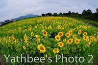 ~ 備中国分寺の夏・・2 ~2020.7.26 - Yathbee's Photo 2