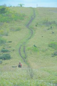 道後山の春①**少しづつ、の、山歩き。 - きまぐれ*風音・・kanon・・