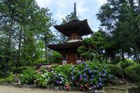 紫陽花咲く久米寺と近畿日本鉄道 - 花景色-K.W.C. PhotoBlog