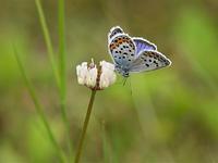 兎平に青い蝶を探して - 不思議の森の迷い人