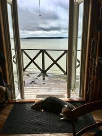 あばら屋アップデート - 湖畔に暮らすミュージシャンと愛犬ハンク/ターシャの日記