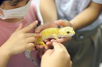 児童画クラス2020年7月テーマ「ヤモリの写生」ご紹介 - 大阪の絵画教室|アトリエTODAY