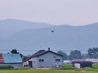 カワウ2020/07/27 - 今朝の一枚 石狩川の朝