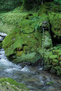 深緑の季節に 2 - 気ままにお散歩