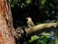 山で観察した野鳥たち - コーヒー党の野鳥と自然パート3