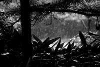 土砂降り20200728 - Yoshi-A の写真の楽しみ