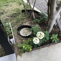 ステイホームの庭づくり - 不完全なマル