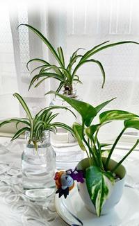 出窓の植物をかえてみました - 風恋華Diary