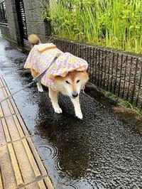 大雨に厳重警戒 - 写心食堂