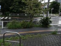 東久留米楊柳川(2)さいわい通り~小金井街道 - ひのきよ