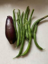 インゲン収穫 - わたしの好きな物