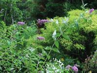 花園の文月 - park diary