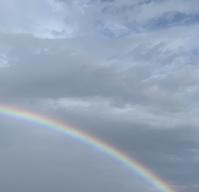 雨と太陽からのプレゼント - アガパンサス日記(ダイアリー)