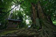 滴水のイチョウ-滴水東屋敷の板碑 - Mark.M.Watanabeの熊本撮影紀行