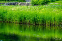 賀茂川 散歩 -8- - ◆Akira's Candid Photography