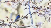 この春の思い出 - 雅郎の花鳥風月