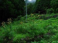 山奥の廃屋 - 飛騨山脈の自然