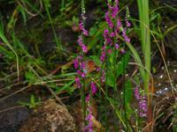 草原環境 - 飛騨山脈の自然