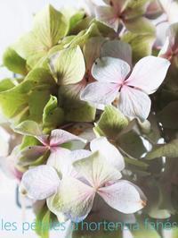パステルの色彩(紫陽花とメロンのソルベ) - serendipity blog