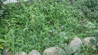 ペレニアル・フラックス花壇 - ウィズコロナのうちの庭の備忘録~Green's Garden~